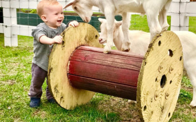9th Annual Farmyard Opening