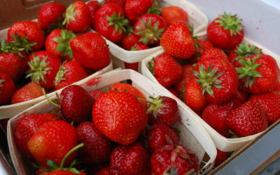 Strawberries On Sale $4.99/qt.