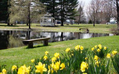 Pineland Pond Fishing