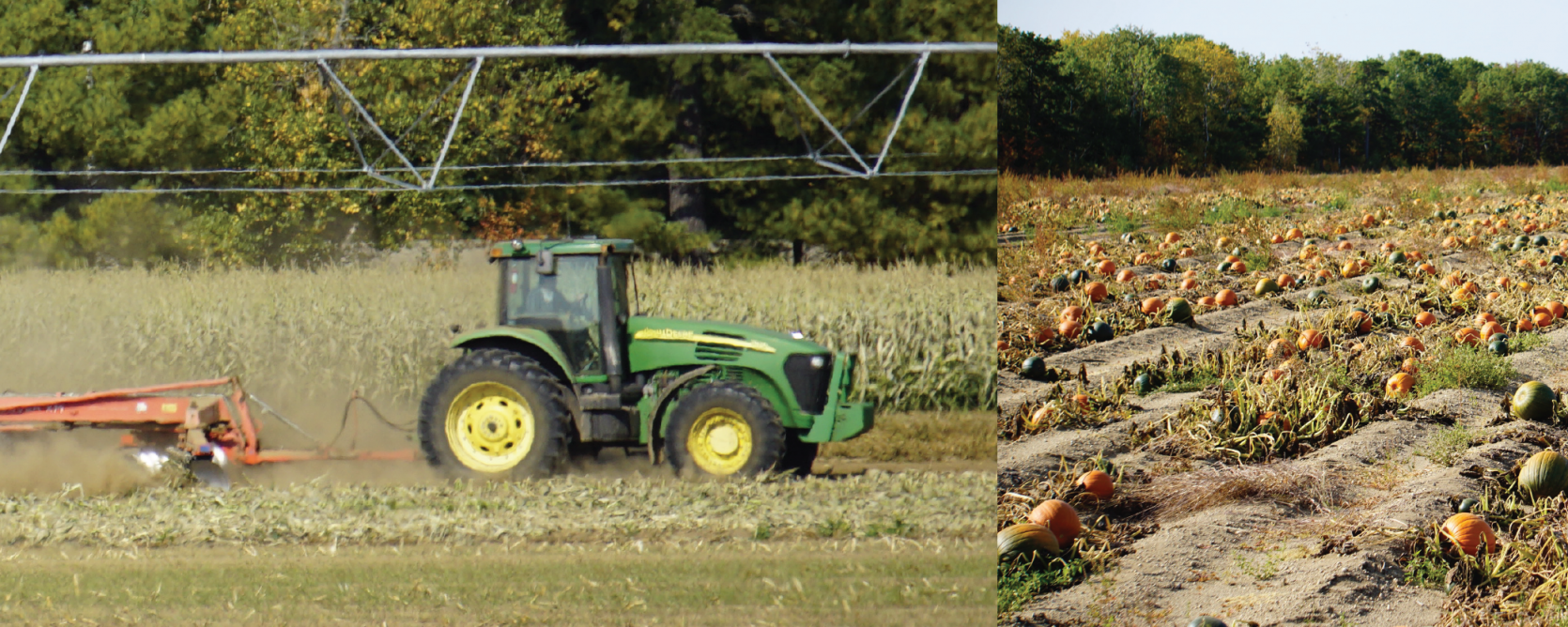 fall pumpkins produce division pineland farms new gloucester maine