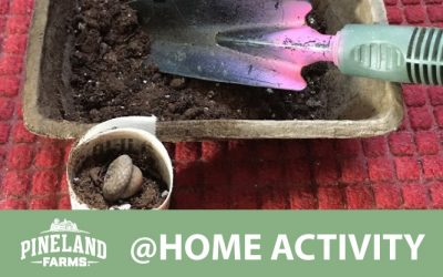Make your own biodegradable planting pot!