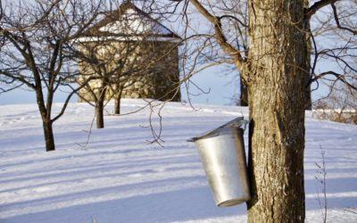 CANCELLED Pineland Farms Maple Sunday