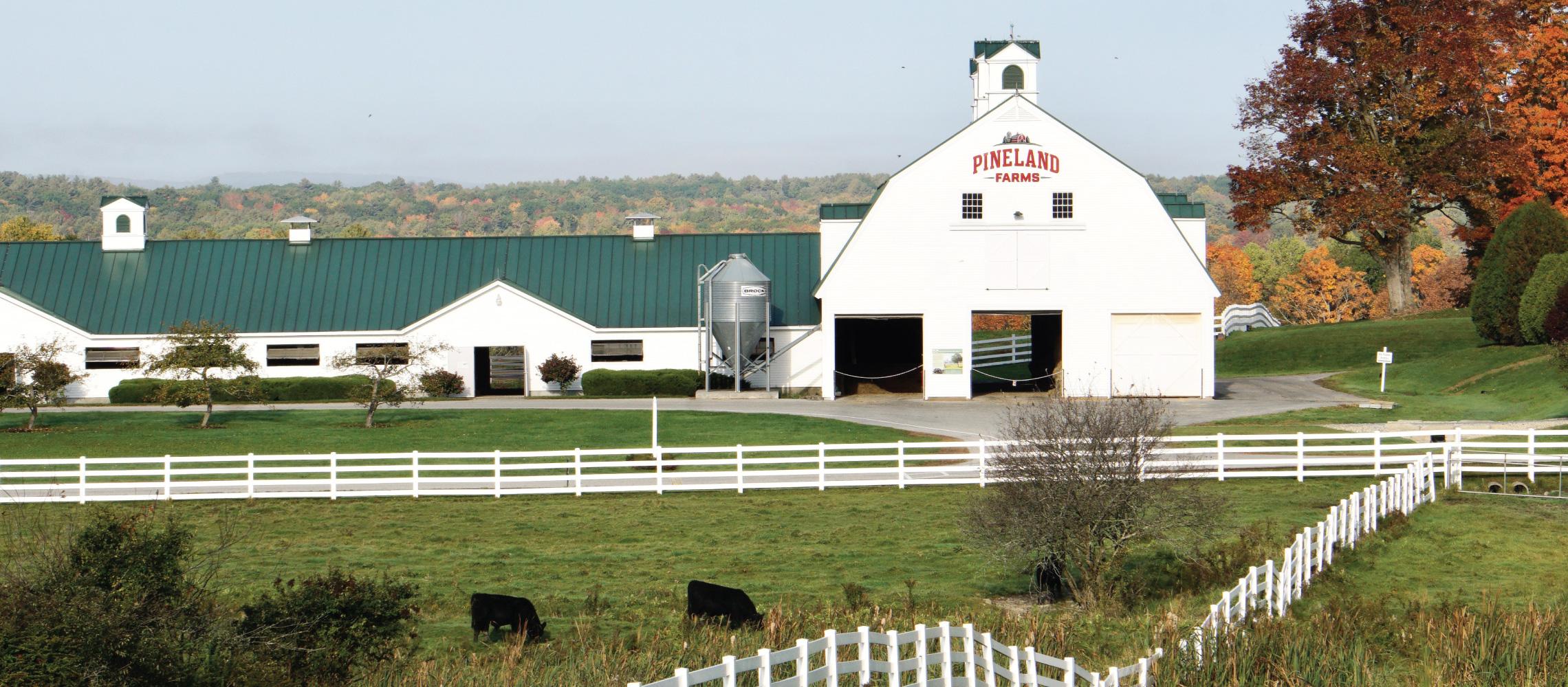 fall dairy barn pineland farms maine